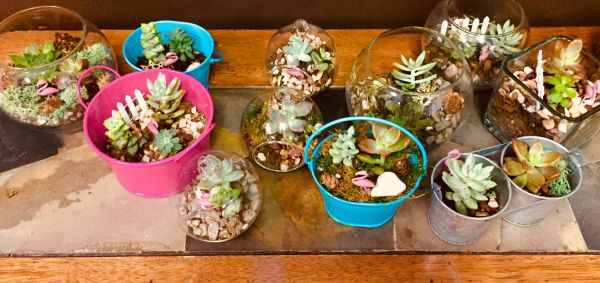 Make Your Own Terrarium At Christmas In July Tonight July 21 4 8